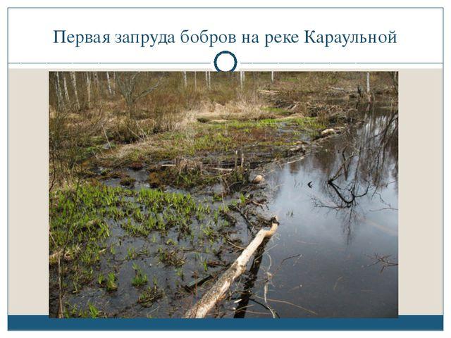 Первая запруда бобров на реке Караульной