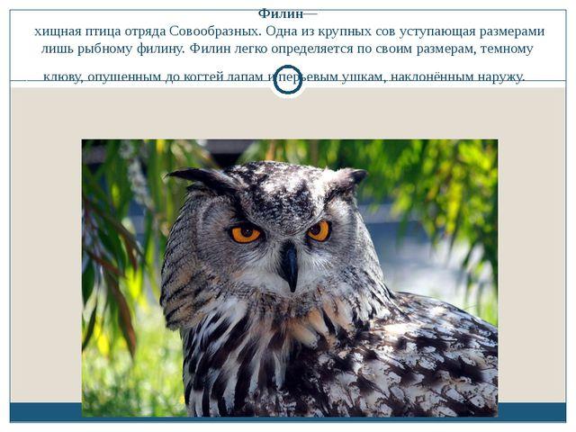 Филин— хищная птица отряда Совообразных. Одна из крупных сов уступающая разме...