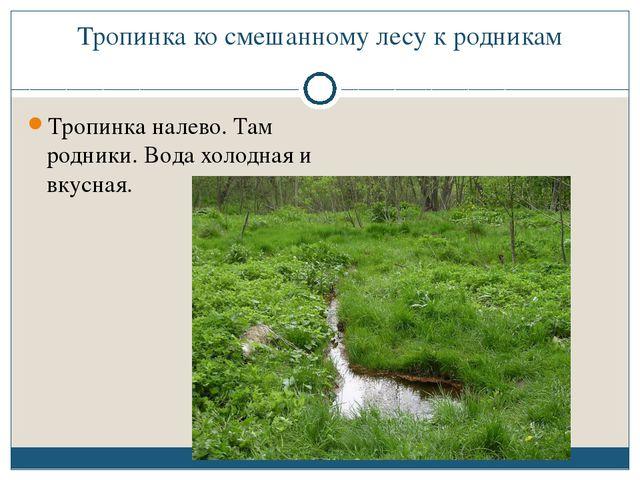Тропинка ко смешанному лесу к родникам Тропинка налево. Там родники. Вода хол...