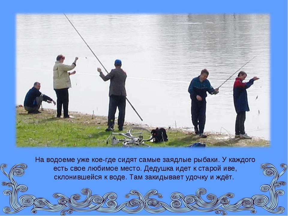 На водоеме уже кое-где сидят самые заядлые рыбаки. У каждого есть свое любимо...