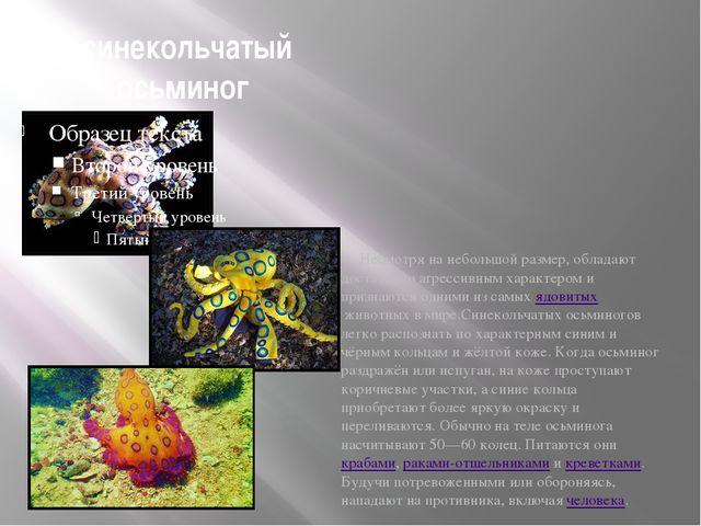 синекольчатый осьминог Несмотря на небольшой размер, обладают достаточно агр...