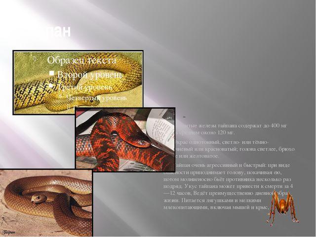Тайпан  Ядовитые железы тайпана содержат до 400мг яда, в среднем около 120...