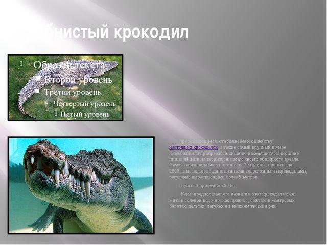 гребнистый крокодил пресмыкающееся, относящееся к семействунастоящих крокоди...