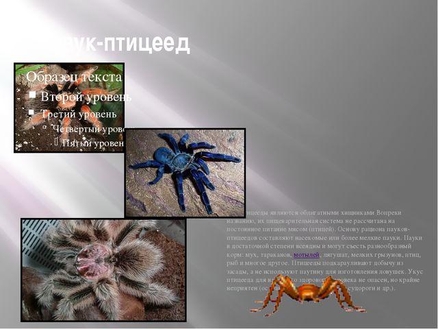 паук-птицеед Птицееды являются облигатными хищниками Вопреки названию, их пищ...
