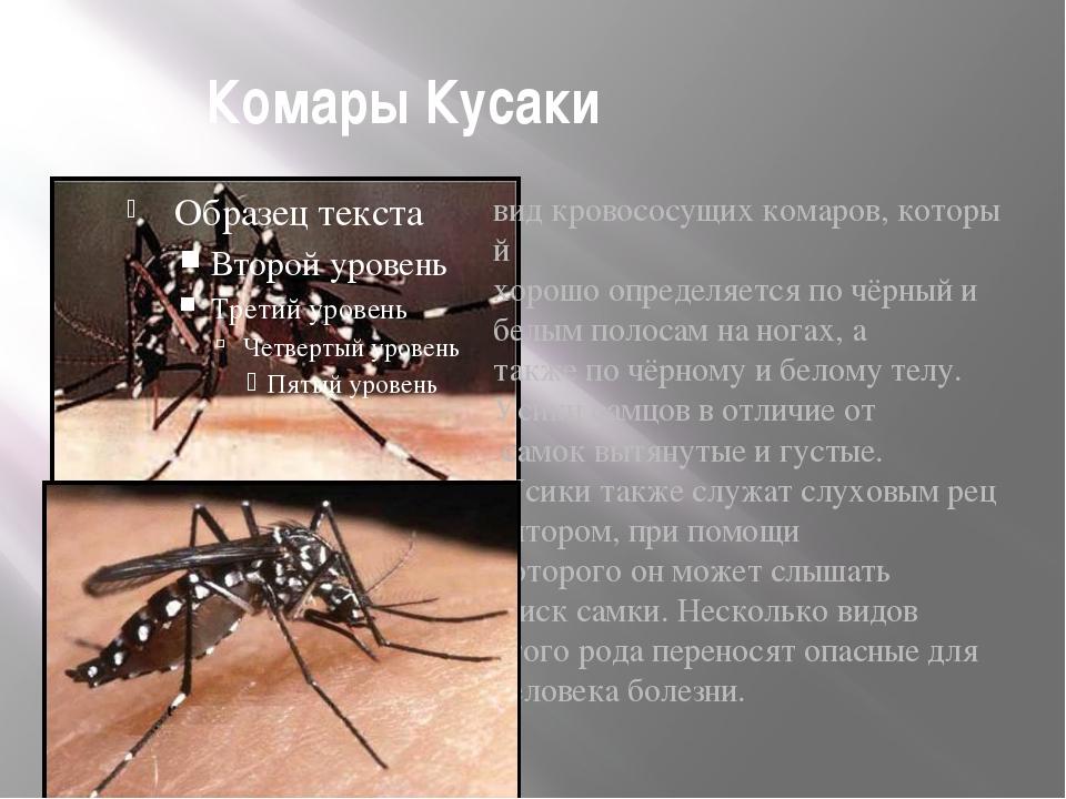 Комары Кусаки  видкровососущихкомаров,который хорошоопределяетсяпочёрн...