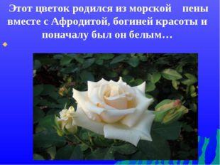 Этот цветок родился из морской пены вместе с Афродитой, богиней красоты и по
