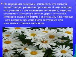 По народным поверьям, считается, что там, где падает звезда, расцветает ромаш