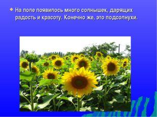 На поле появилось много солнышек, дарящих радость и красоту. Конечно же, это