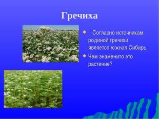 Гречиха Согласно источникам, родиной гречихи является южная Сибирь. Чем знаме