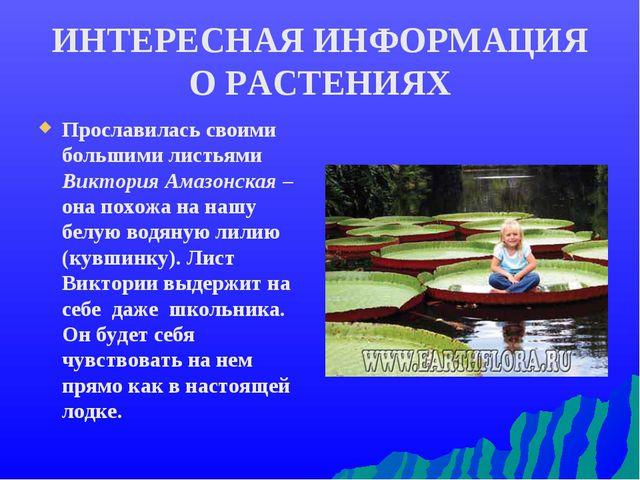 ИНТЕРЕСНАЯ ИНФОРМАЦИЯ О РАСТЕНИЯХ Прославилась своими большими листьями Викто...