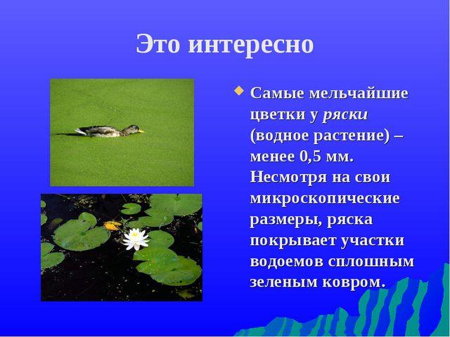 Это интересно Самые мельчайшие цветки у ряски (водное растение) – менее 0,5 м...