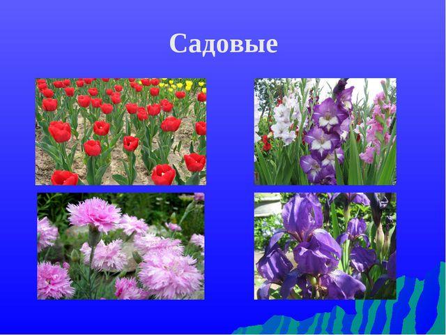 Садовые