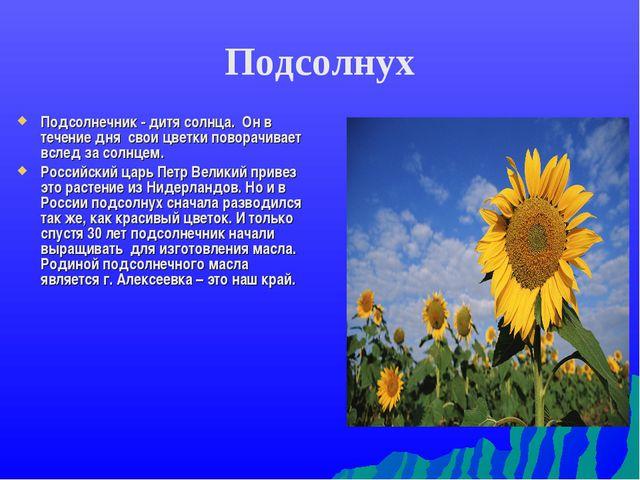 Подсолнух Подсолнечник - дитя солнца. Он в течение дня свои цветки поворачива...