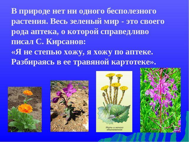 В природе нет ни одного бесполезного растения. Весь зеленый мир - это своего...