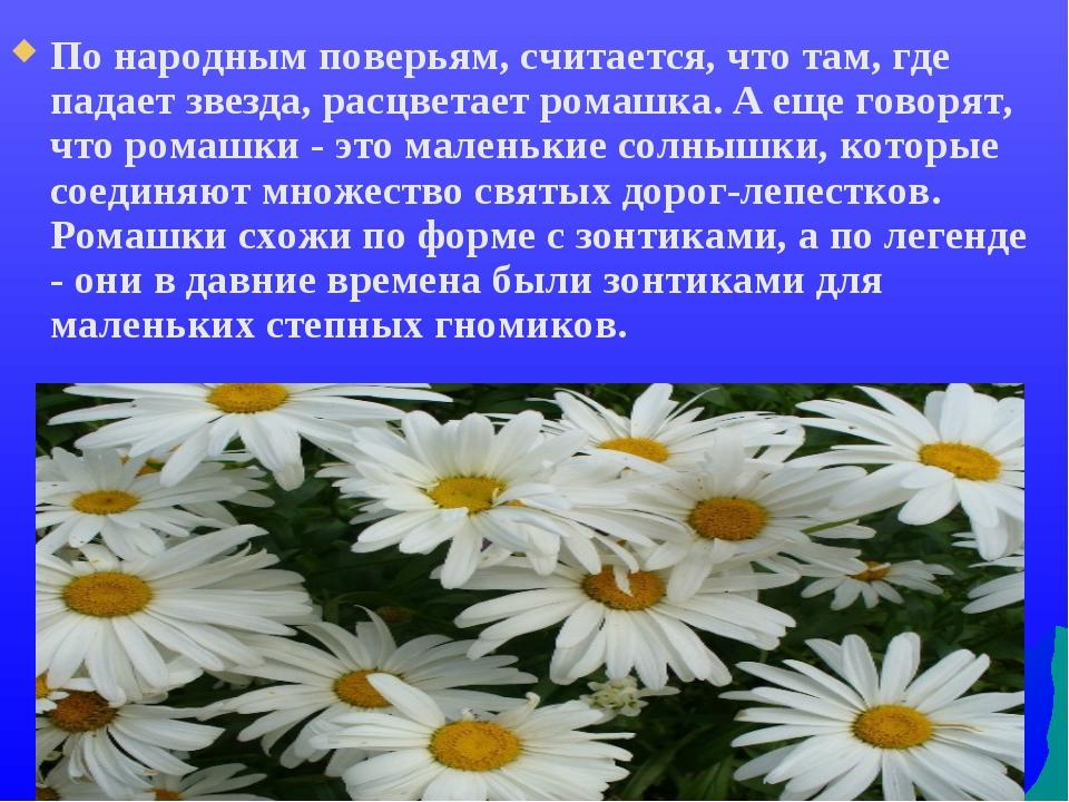 По народным поверьям, считается, что там, где падает звезда, расцветает ромаш...