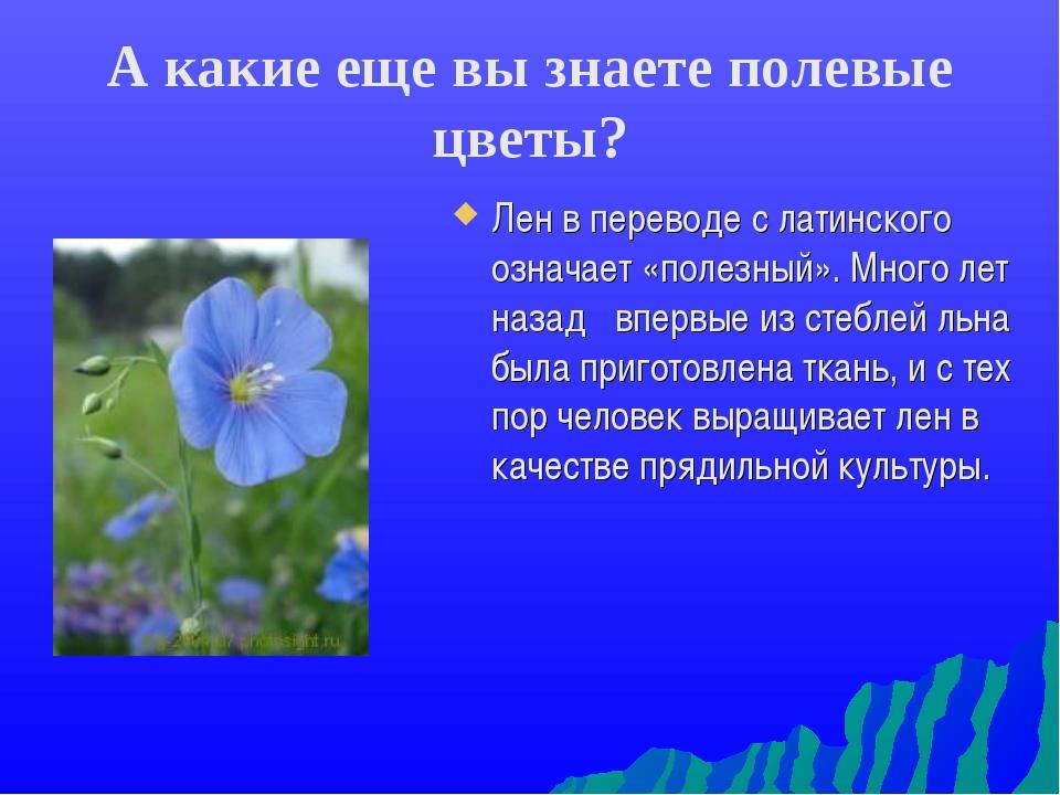 А какие еще вы знаете полевые цветы? Лен в переводе с латинского означает «по...
