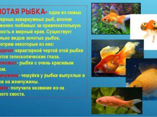 ЗОЛОТАЯ РЫБКА- одна из самых популярных аквариумных рыб, вполне заслуженно лю