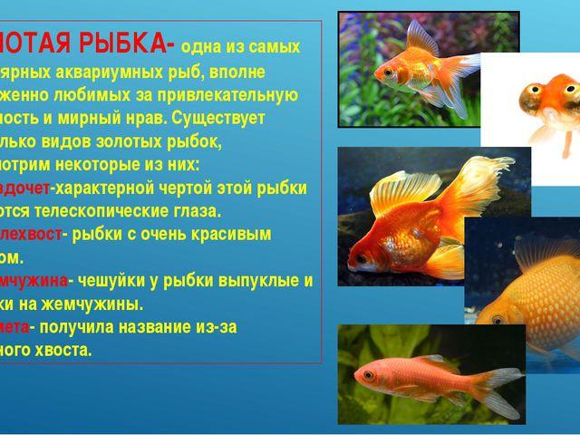 Конспект на тему аквариумные рыбки 1 класс