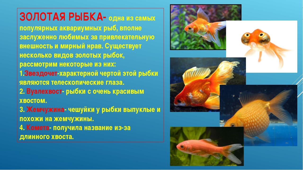 Доклад на тему золотая рыбка 3741