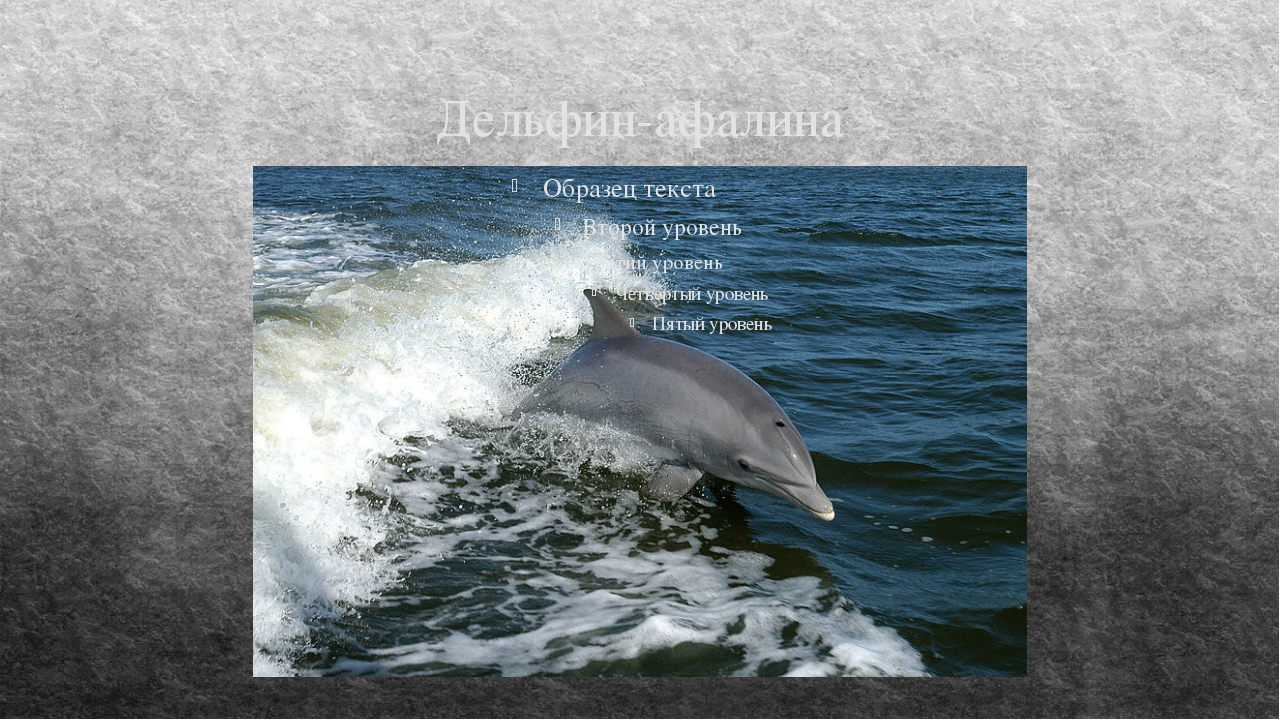 Дельфин-афалина