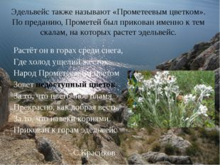 Эдельвейс также называют «Прометеевым цветком». По преданию, Прометей был при
