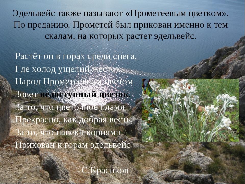 Эдельвейс также называют «Прометеевым цветком». По преданию, Прометей был при...