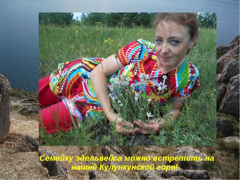 Семейку эдельвейса можно встретить на нашей Кулункунской горе!