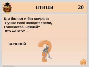 ПТИЦЫ 20 СОЛОВЕЙ Кто без нот и без свирели Лучше всех наводит трели, Голосист