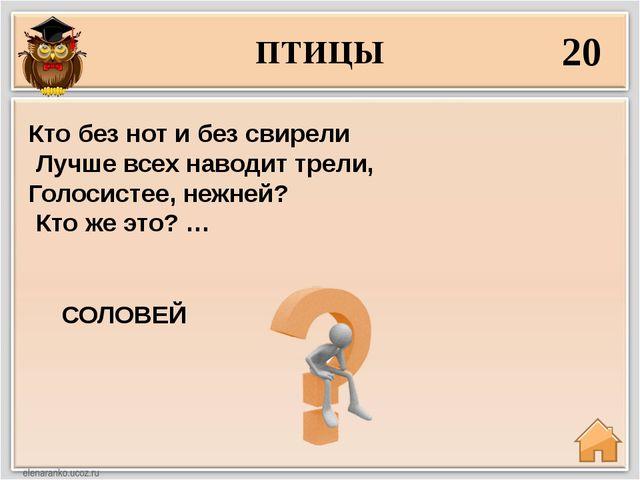 ПТИЦЫ 20 СОЛОВЕЙ Кто без нот и без свирели Лучше всех наводит трели, Голосист...
