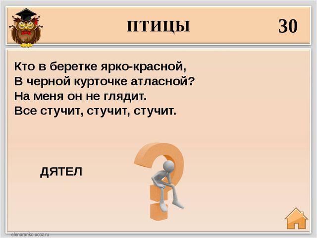 ПТИЦЫ 30 ДЯТЕЛ Кто в беретке ярко-красной, В черной курточке атласной? На мен...