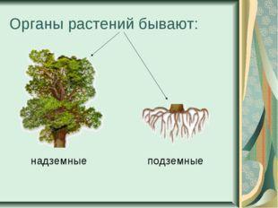 Органы растений бывают: надземные подземные