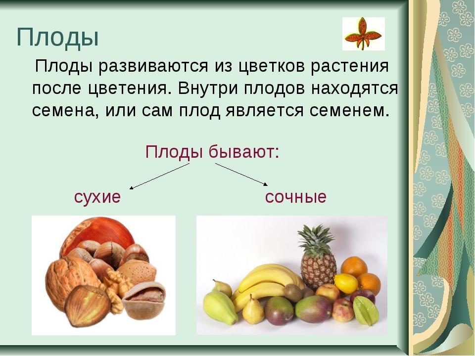 Плоды Плоды развиваются из цветков растения после цветения. Внутри плодов нах...