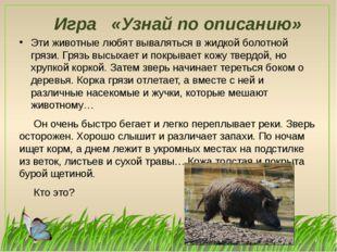 Игра «Узнай по описанию» Эти животные любят вываляться в жидкой болотной гряз