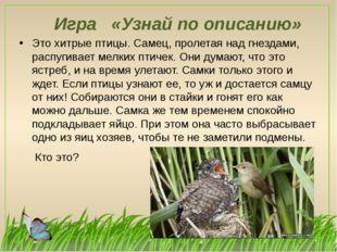 Игра «Узнай по описанию» Это хитрые птицы. Самец, пролетая над гнездами, расп
