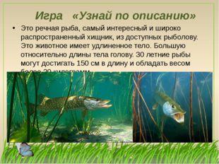 Игра «Узнай по описанию» Это речная рыба, самый интересный и широко распростр