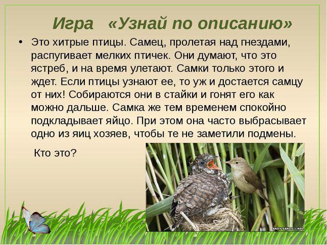 Игра «Узнай по описанию» Это хитрые птицы. Самец, пролетая над гнездами, расп...
