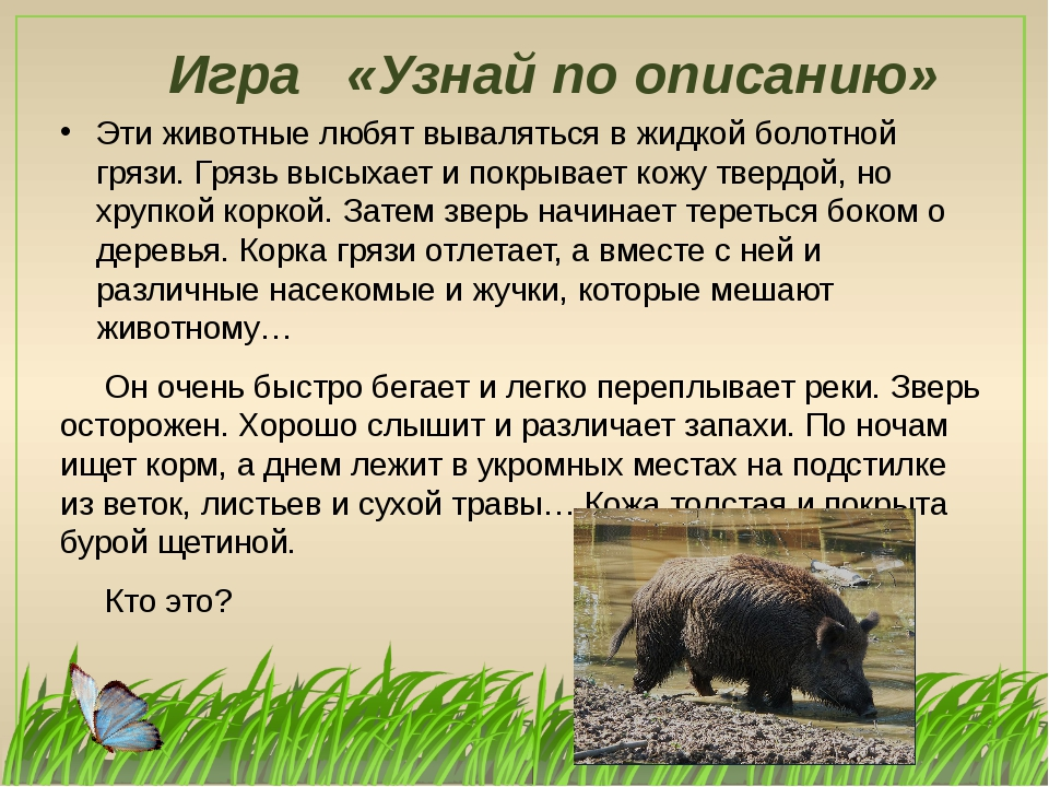 Игра «Узнай по описанию» Эти животные любят вываляться в жидкой болотной гряз...
