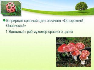 В природе красный цвет означает «Осторожно! Опасность!» 1.Ядовитый гриб мухом