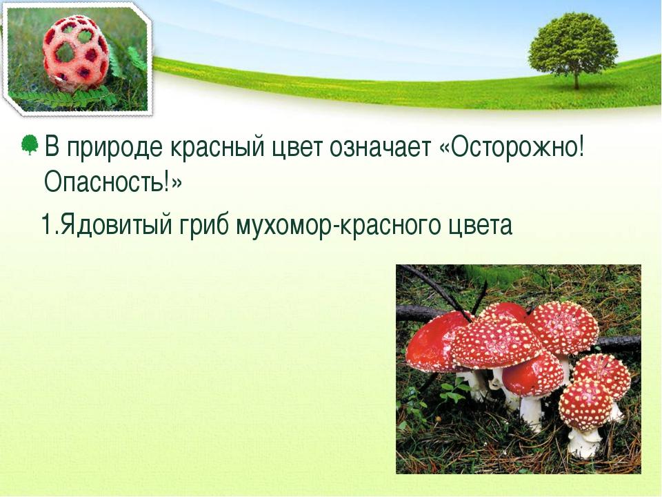 В природе красный цвет означает «Осторожно! Опасность!» 1.Ядовитый гриб мухом...