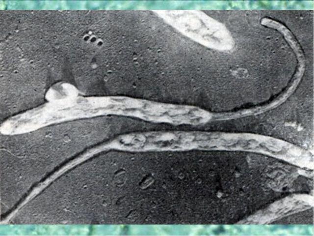 Эволюция метаболизма Истощение запасов абиогенных органических веществ привел...