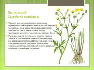 Лютик едкий Семейство лютиковых Ядовитое многолетнее растение с укороченным к