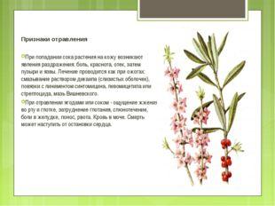 Признаки отравления При попадании сока растения на кожу возникают явления раз