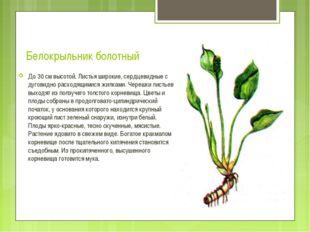 Белокрыльник болотный До 30 см высотой. Листья широкие, сердцевидные с дугови