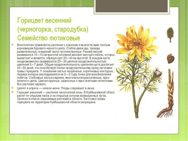 Горицвет весенний (черногорка, стародубка) Семейство лютиковые Многолетнее тр...