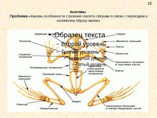 Анатомы Проблема «Каковы особенности строения скелета лягушки в связи с перех