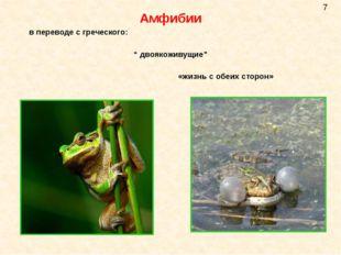 """Амфибии в переводе с греческого: """" двоякоживущие"""" «жизнь с обеих сторон» 7"""