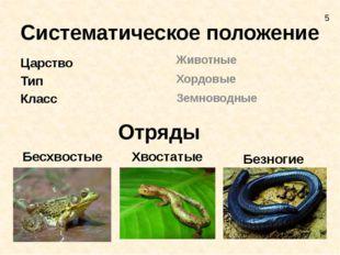 Систематическое положение Царство Тип Класс Животные Хордовые Земноводные Отр