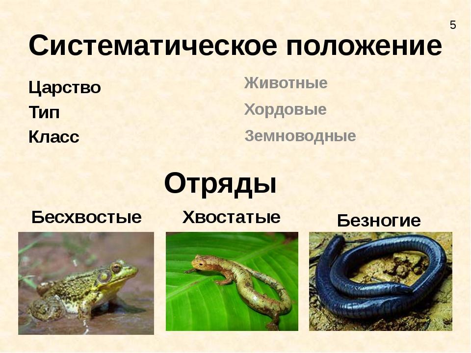Систематическое положение Царство Тип Класс Животные Хордовые Земноводные Отр...