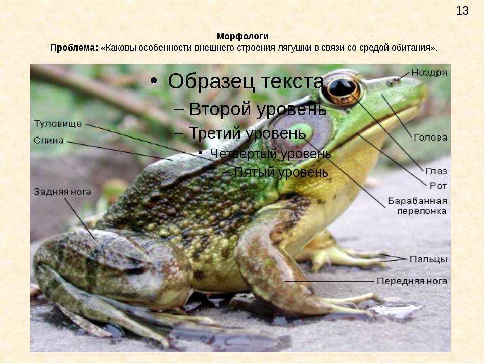 Морфологи Проблема: «Каковы особенности внешнего строения лягушки в связи со...