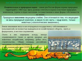 Национальные и природные парки – новая для России форма охраны природных терр